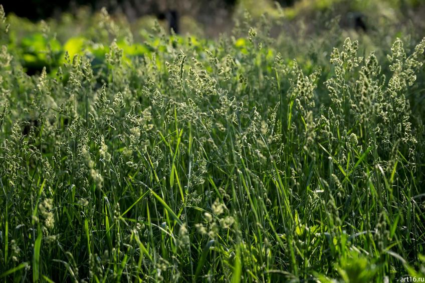 Фото №897833. Луговая трава