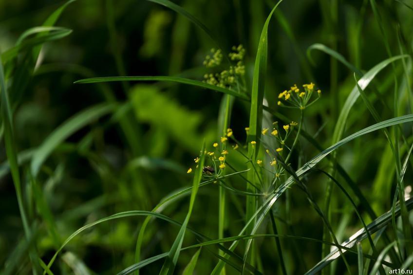 Фото №897925. Трава