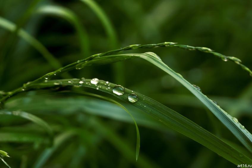 Роса в траве::Зарисовки. Природа