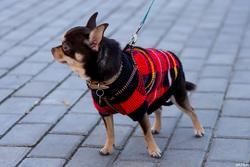 «Собачий бал» спортивно-развлекательное мероприятие для собак и человеков