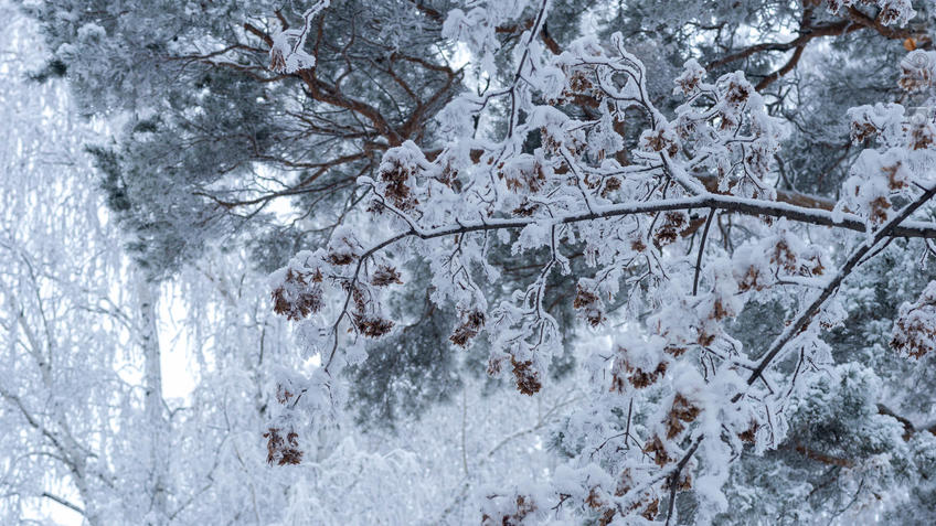 Фото №951058. Art16.ru Photo archive