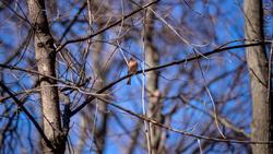 20190424 - весна природа лес птицы