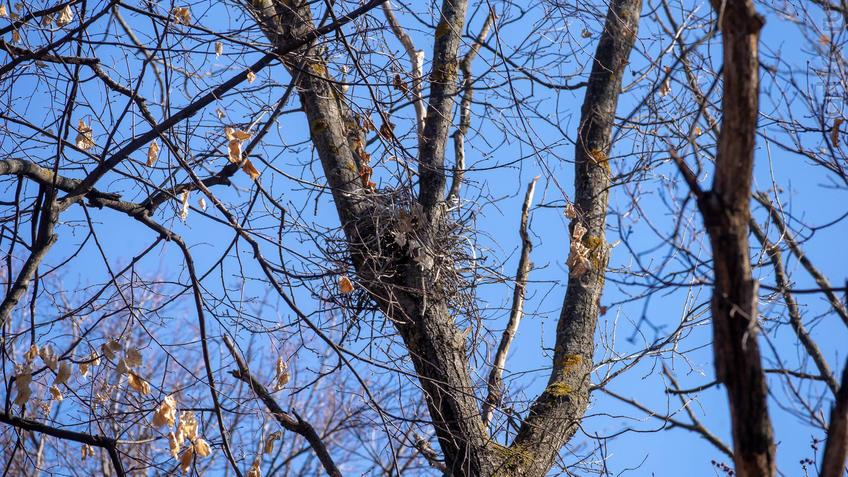 Гнездо::20190424 - весна природа лес птицы