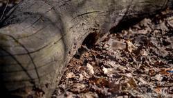 Рыжая полевка - самый многочисленный грызун в лесах средней полосы России