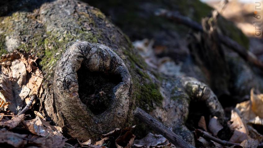 Дупло::20190424 - весна природа лес птицы
