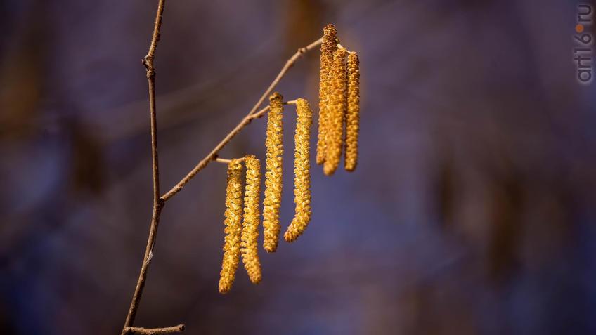 Сережки::20190424 - весна природа лес птицы