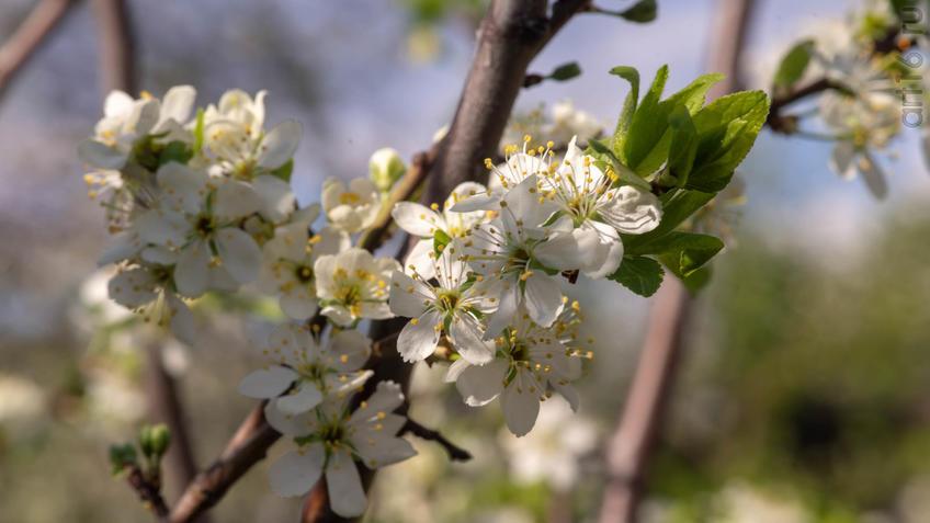 ::2019 весна, цветы