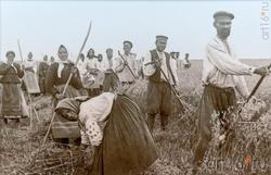 Сенокос  (архивное фото Музея М.Горького в с.Красновидово)