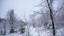 Балашов. Зимние пейзажи - 2020